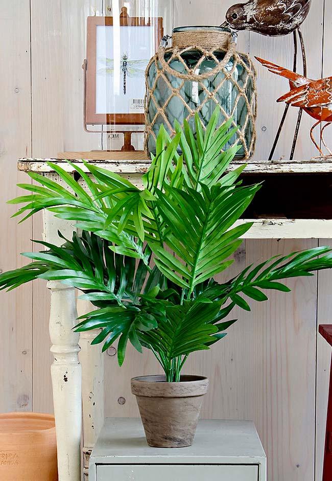 Areca palm trees in garden shops
