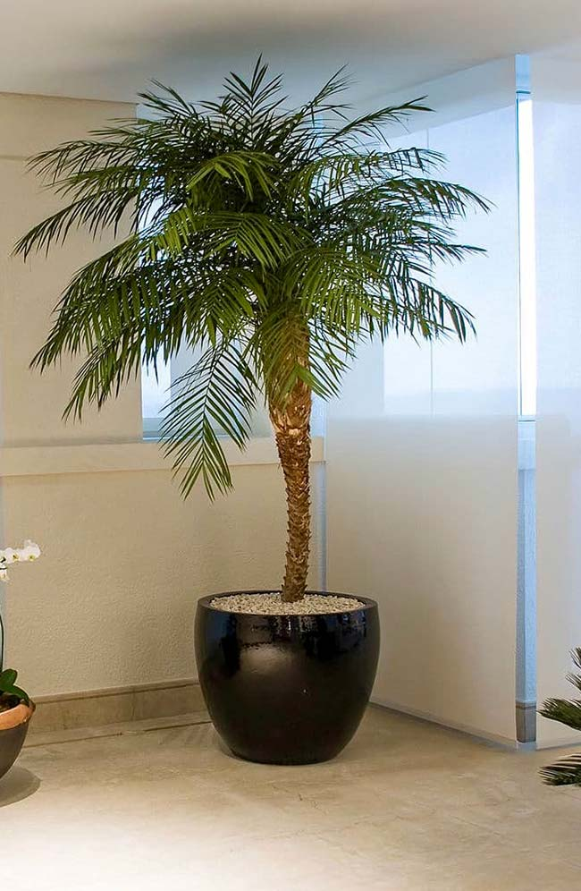Plant with elegant look and palm tree