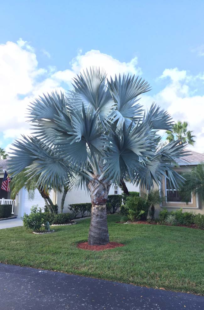 Welcome to those who arrive at the residence with the blue palm