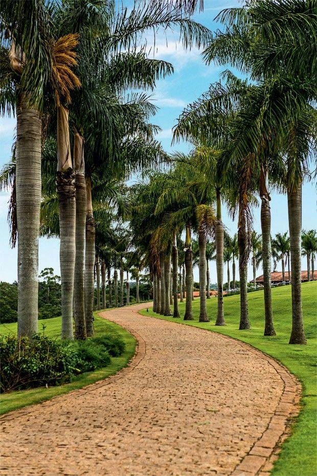 Path of imperial palm trees