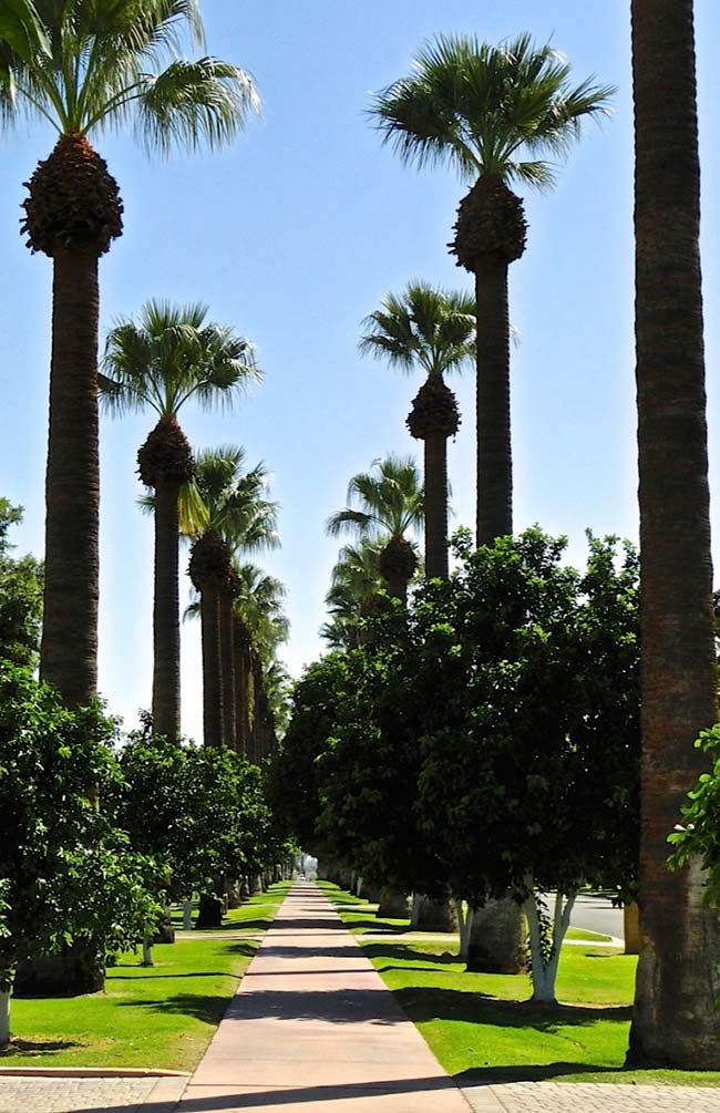 Imperial palms in conjunction with smaller species