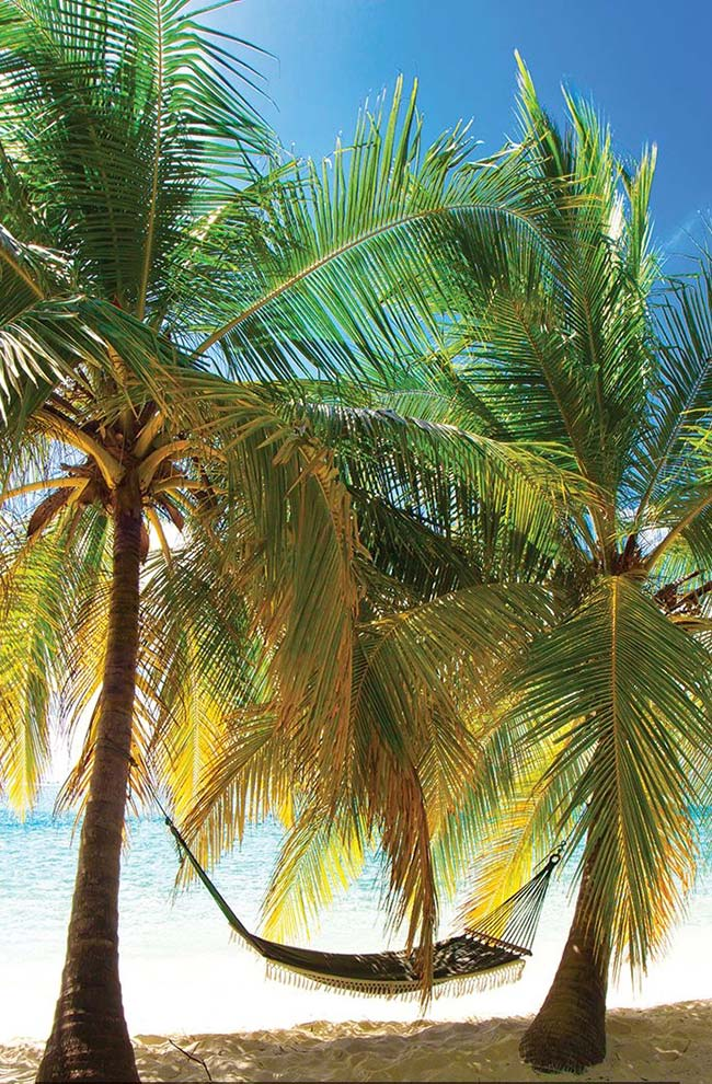 The bottle palm is a good option to be grown in coastal regions
