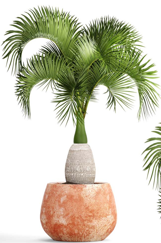 Palm bottles can be planted in pot