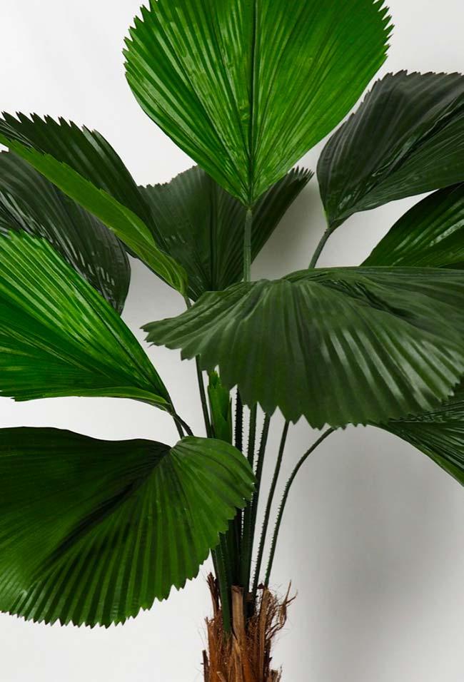Green leaves of fan palm
