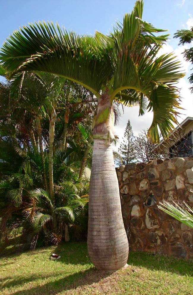 Palm tree ornamenting the garden