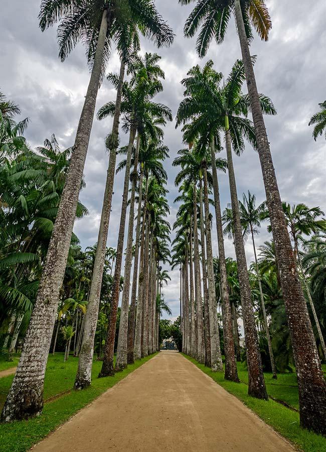 Lush and majestic palm