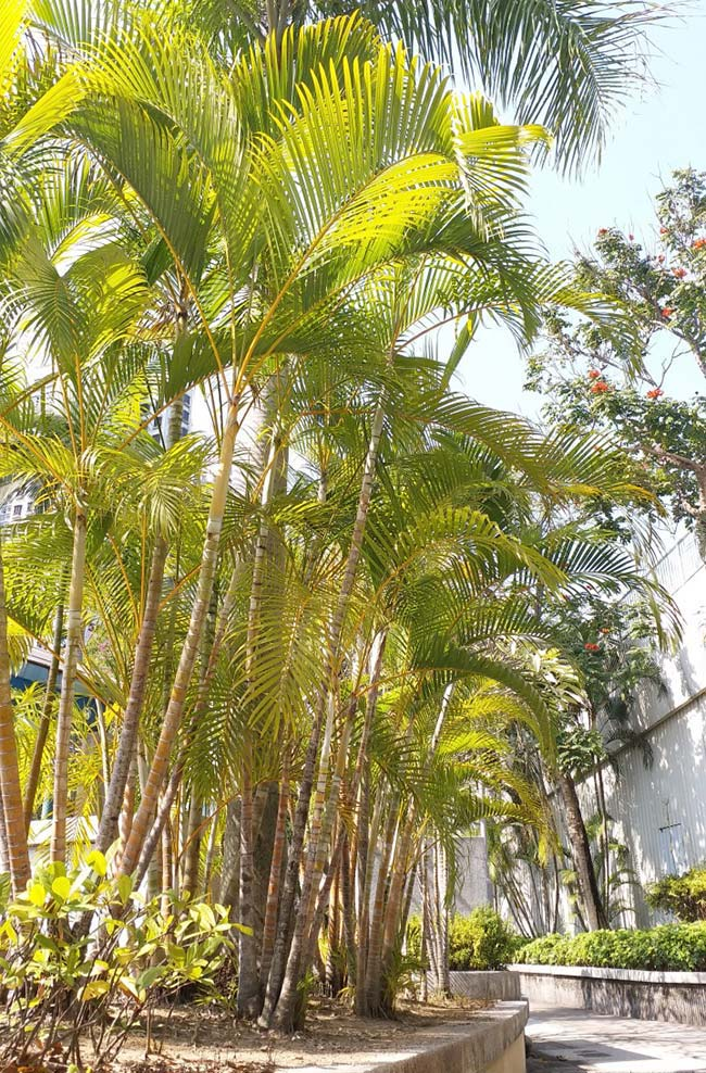 Set of palm trees forming a green and yellow massif