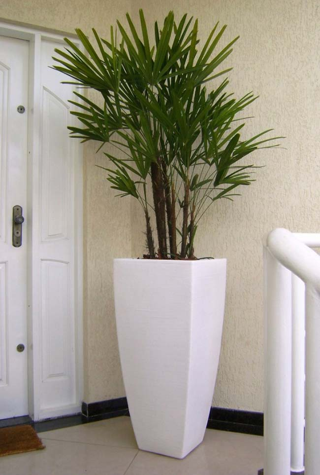 Style and elegance the plant with pot