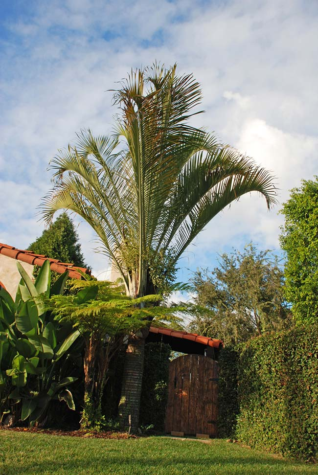 Palm tree at the entrance of the house