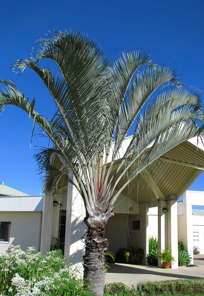 Palm tree at the entrance of commercial establishment