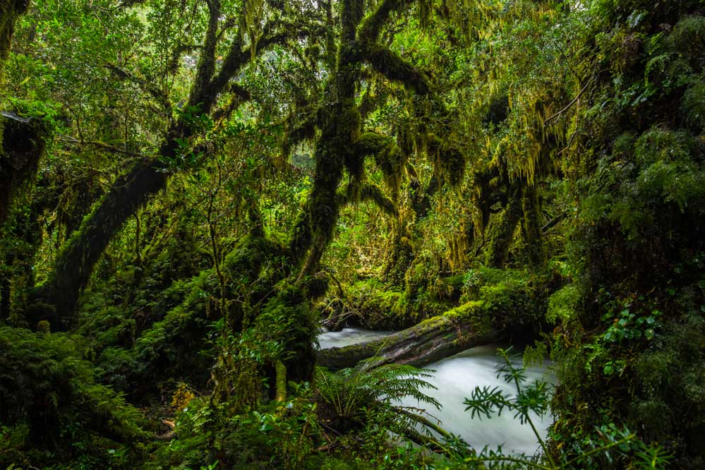 Valdivian forest in Chile