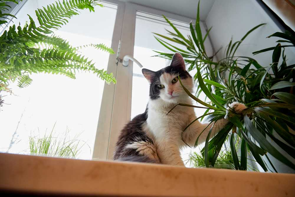 What are the symptoms of plant poisoning in cats
