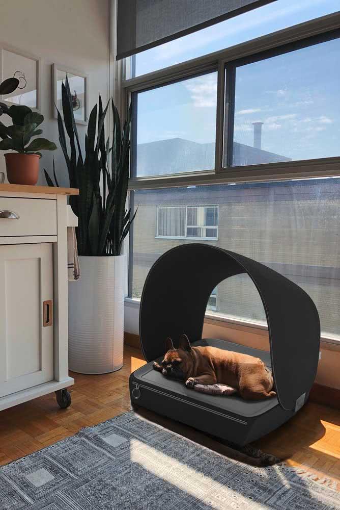 Casinha de cachorro para apartamento: o modelo aberto não é problema