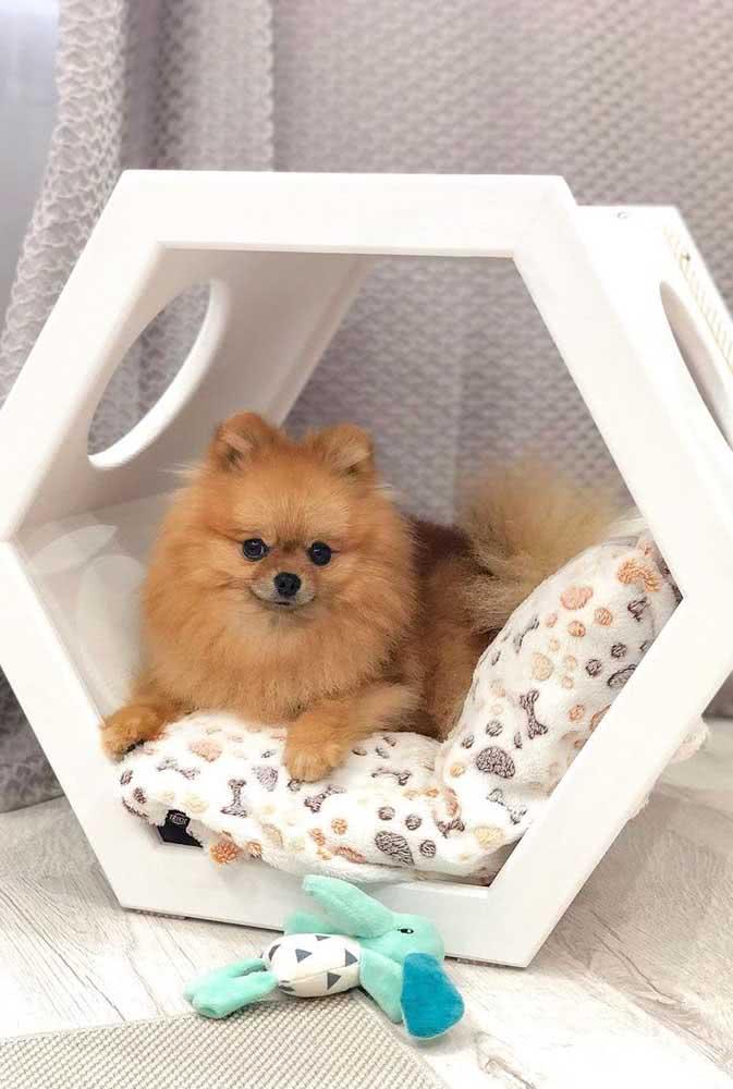 Os cães de pequeno porte ficam bem acomodados em casinhas tipo nicho