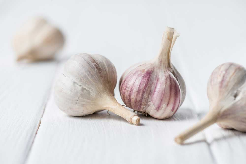 How to plant garlic: simple step by step to make at home