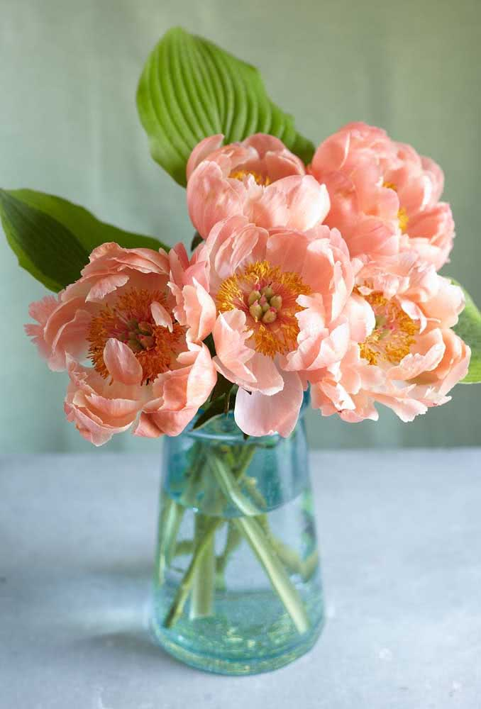Clean vase, fresh water and adequate brightness are all that the peony flowers need to last longer