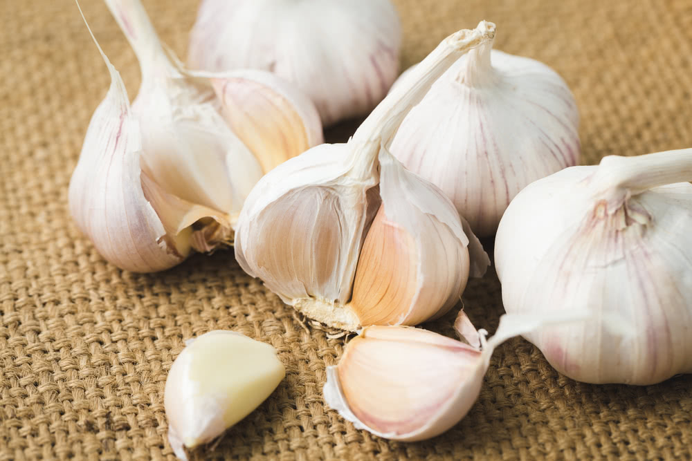 How to plant garlic: where to start?