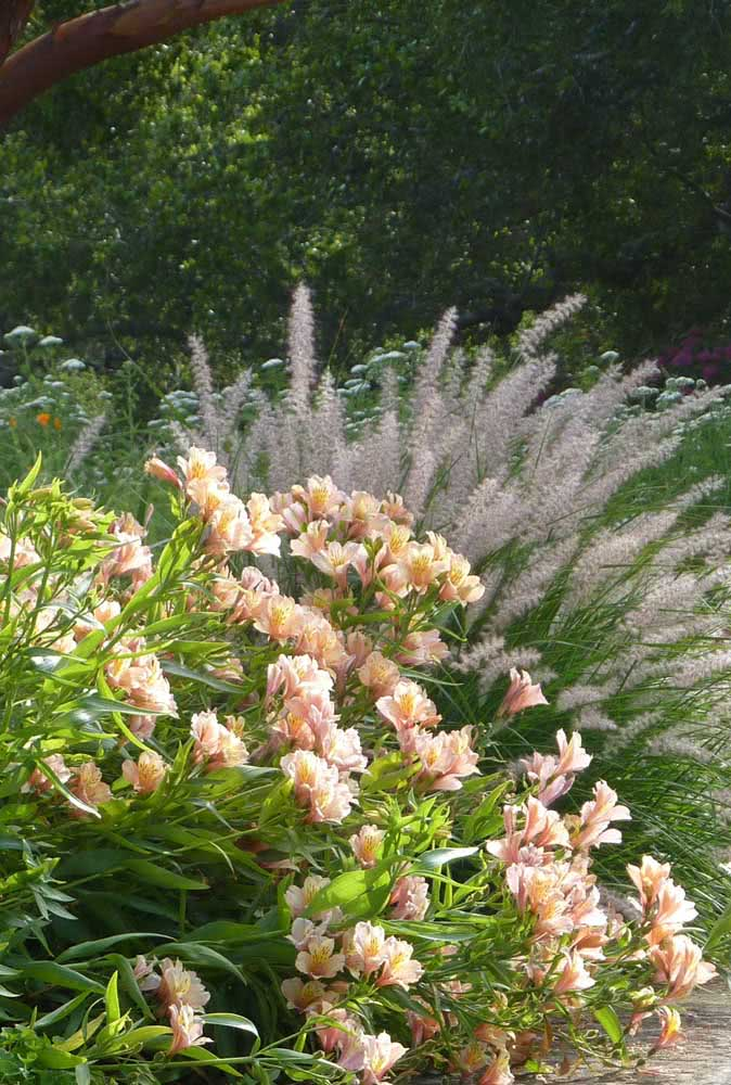 Astromelia in the garden: a path of delicate and fragrant flowers