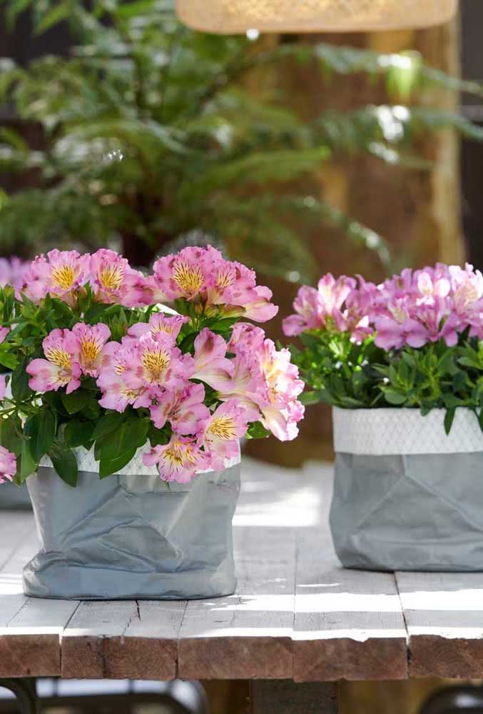 Astromélias planted in the vase guarantee an extra charm to the decoration
