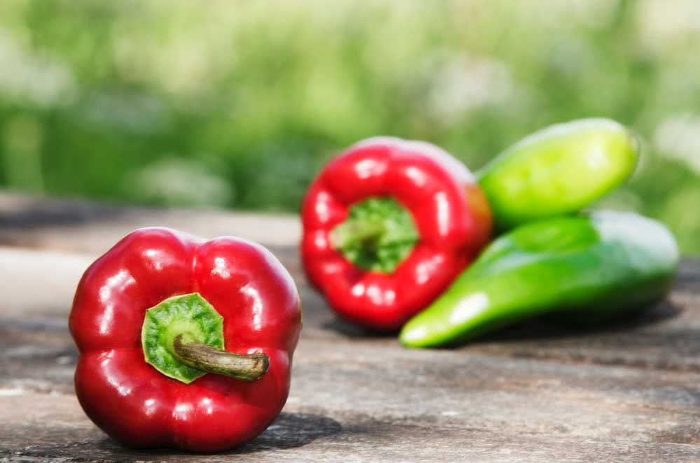how to plant chili
