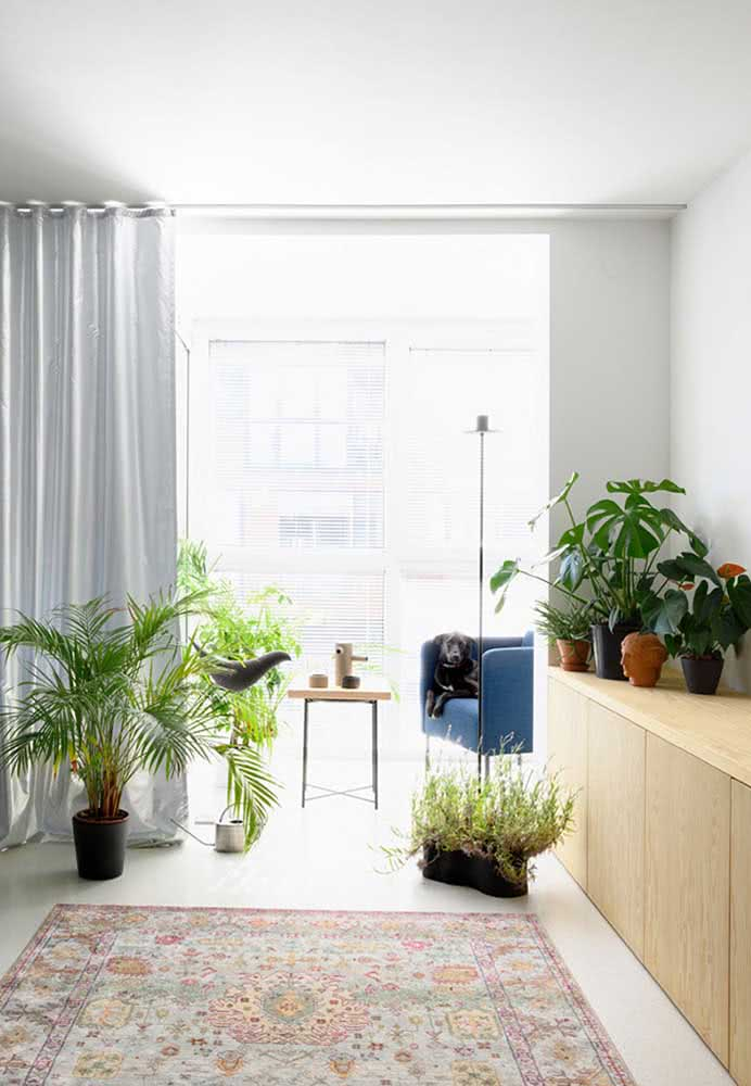 Urban jungle in the living room with Allocasias, palm trees and Adam's ribs