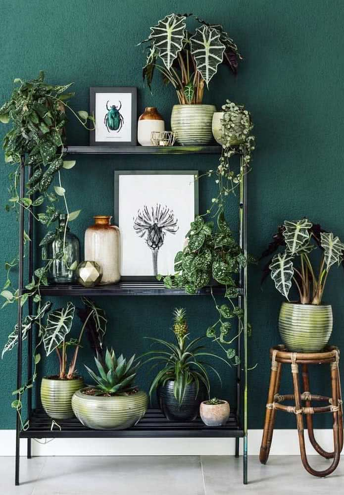 The green background on the wall brings even more drama to the Allocasias in the golden vase