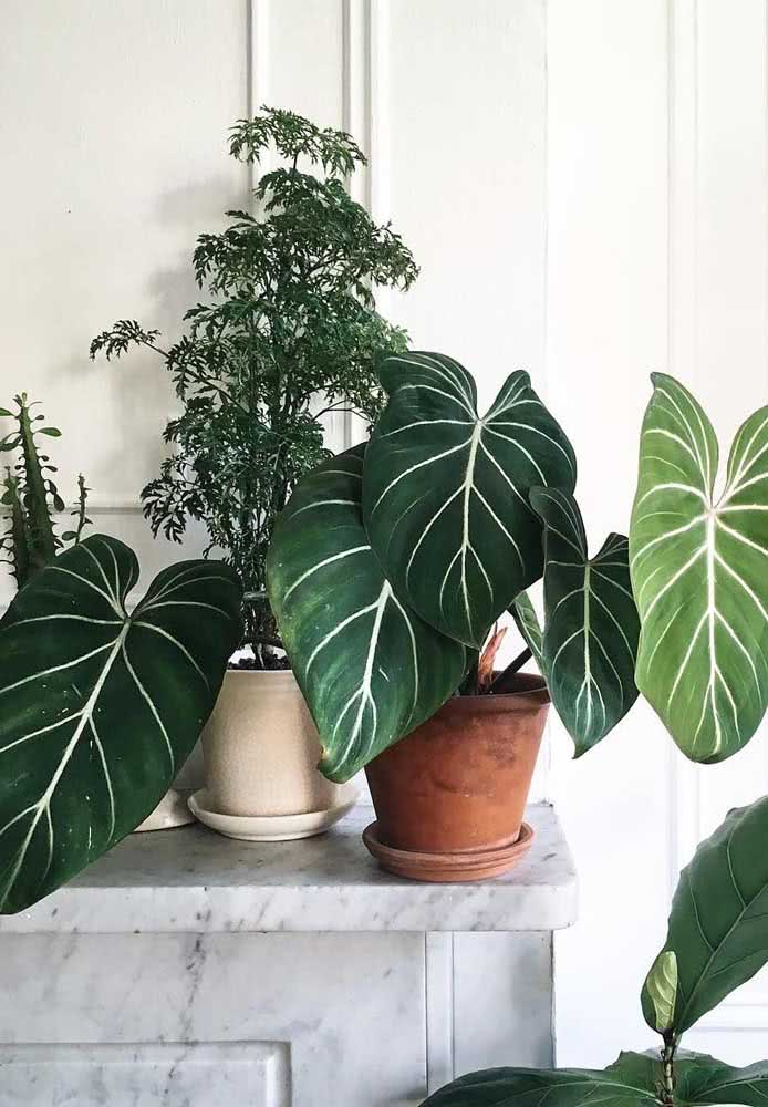 Lush leaves to fill the decor with life