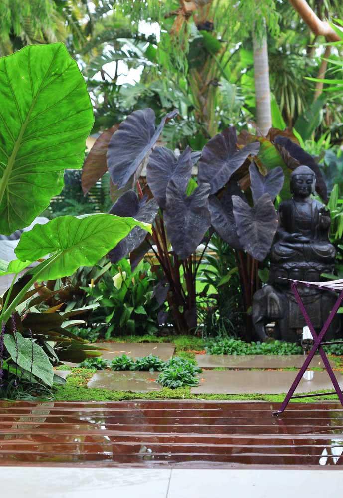 Allocasias in the garden