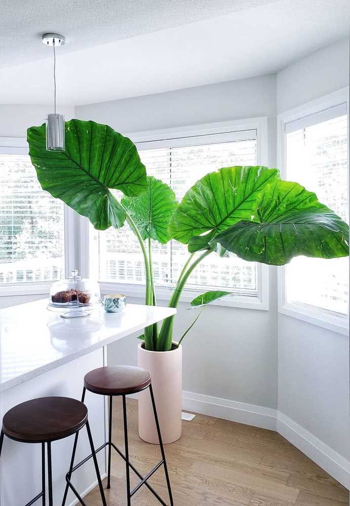 For those who appreciate plants in giant versions
